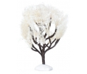 Hollandse winterboom 15 cm