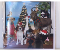 Kerstkaart - Animals - Text inside: Merry Christmas an a Happy New Year